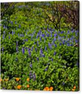 Poppies Before Lupines Canvas Print