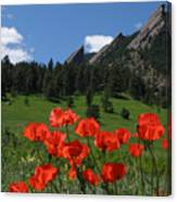 Poppies Flatirons Canvas Print