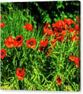 Poppies Flowerbed Canvas Print