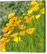 Poppies Hillside Meadow Landscape 19 Poppy Flowers Art Prints Baslee Troutman Canvas Print