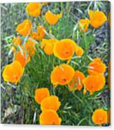 Poppies II Canvas Print