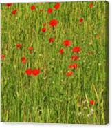 Poppies In A Wheat Field Canvas Print