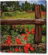 Poppies In The Texas Hill Country Canvas Print