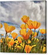 Poppies In The Wind Part Two  Canvas Print