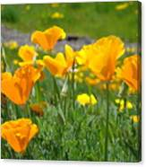 Poppies Meadow Summer Poppy Flowers 18 Wildflowers Poppies Baslee Troutman Canvas Print