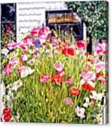 Poppies On Niagara Street Canvas Print