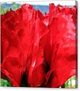 Poppies Plus Canvas Print