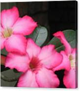 Poppin Pink Flowers Canvas Print