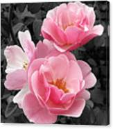 Popping Pink Roses Canvas Print
