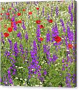 Poppy And Wild Flowers Meadow Nature Scene Canvas Print