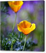 Poppy Ballet Canvas Print