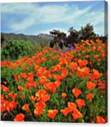 Poppy Explosion Canvas Print
