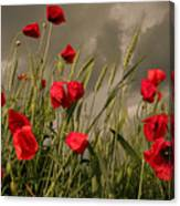 Poppy Field Before The Storm Canvas Print