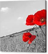 Poppy Fields 2 Black And White Canvas Print