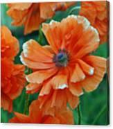 Poppy Fields Canvas Print
