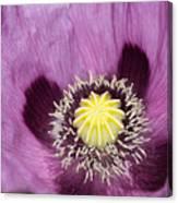 Poppy Flower Close Up Canvas Print