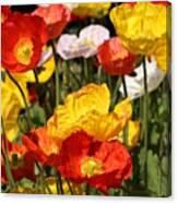 Poppy Flower Garden Canvas Print