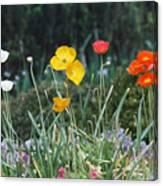 Poppy Flower Mix Canvas Print