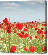 Poppy Flowers Field Nature Spring Scene Canvas Print