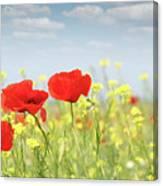 Poppy Flowers Nature Spring Scene Canvas Print