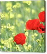 Poppy Flowers Spring Scene Canvas Print