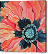 Poppy For A New Day Canvas Print