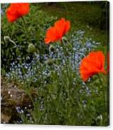 Poppy Foursome Canvas Print