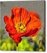 Poppy - Id 16235-142749-5072 Canvas Print