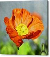 Poppy - Id 16235-142758-2720 Canvas Print