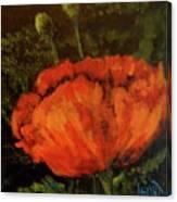 Poppy IIi Canvas Print