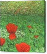 Poppy In Country Canvas Print