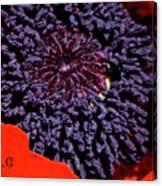 Poppy Inside Canvas Print