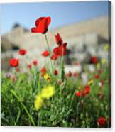 Red Poppy Flower On The Meadow Canvas Print