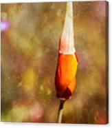 Poppy Metamorphose Canvas Print