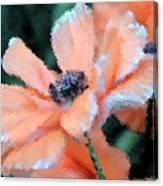Poppy Primadonna Canvas Print