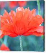 Poppy Profile Canvas Print