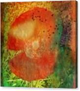 Poppy Study Canvas Print