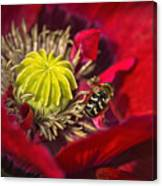 Poppy Visited Part II Canvas Print