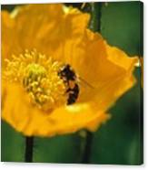 Poppy With Bee Friend Canvas Print