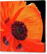Poppy With Raindrops 2 Canvas Print