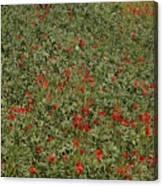 Poppyed Canvas Print