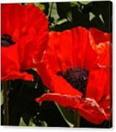 Poppys Canvas Print