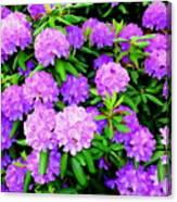 Pops Of Purple Canvas Print