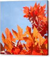 Popular Autumn Art Red Orange Fall Tree Nature Baslee Troutman Canvas Print