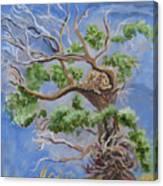 Porcupine In Cottonwood Canvas Print
