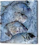 Porgies On Ice Canvas Print