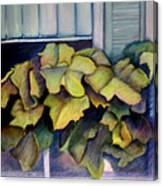 Port Norfolk Window Box Canvas Print