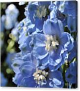 Portrait Blue Delphinium 114 Canvas Print