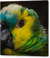 Portrait Of A Blue-fronted Parrot Canvas Print