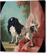 Portrait Of A Cavalier King Charles Spaniel Canvas Print
